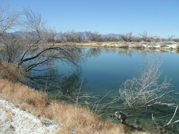 ash meadows lake