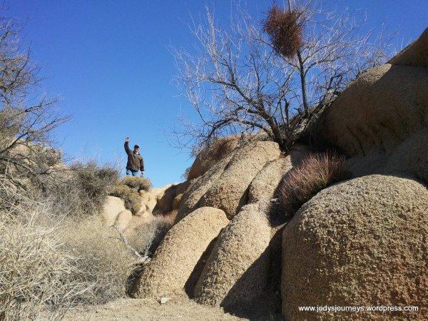 Joshua Tree's Rocks